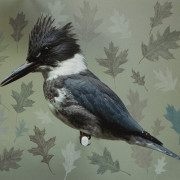 BELTED KINGFISHER WITH OAK LEAVES