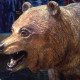 CALIFORNIA GRIZZLY (DETAIL)