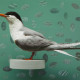 FORSTER'S TERN 1 OF 5 UNIQUE