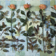 5 APRICOT ROSES, 2005