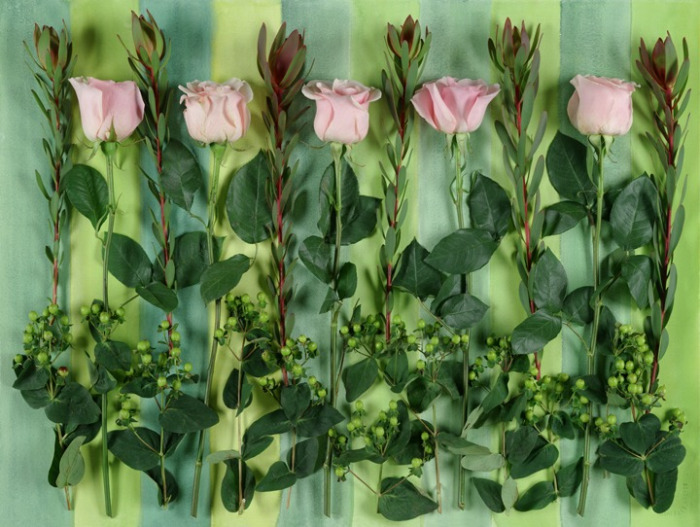 5 PINK ROSES