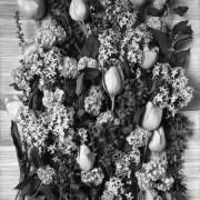 TULIPS AND LILACS (B&W) 2005