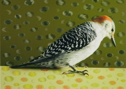 RED-BELLIED WOODPECKER WITH FEATHER ELLIPSE 1 OF 5