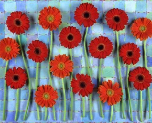 RED STEMMED GERBERS 2005