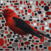 SCARLET TANAGER IN ELLIPSE FIELD