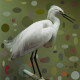 SNOWY EGRET 1 OF 5