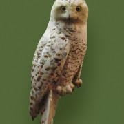 SNOWY OWL IN GREEN FIELD PORTRAIT
