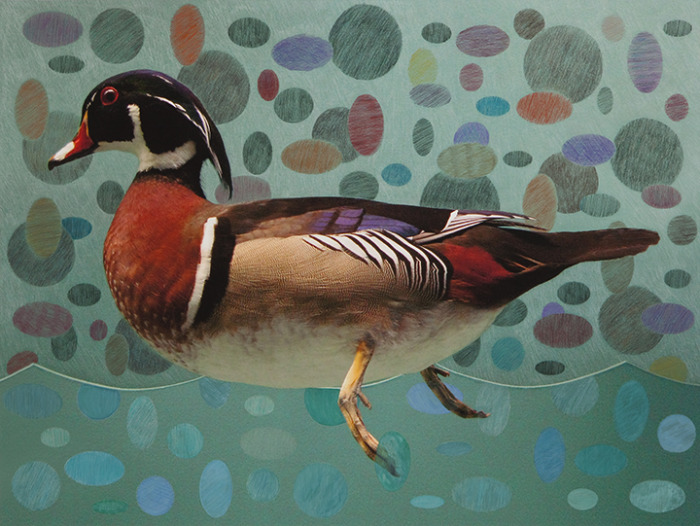 WOOD DUCK 1 OF 5
