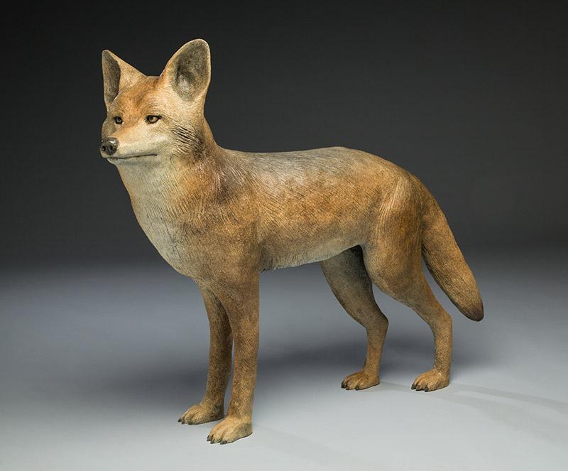 Pasadena Coyote