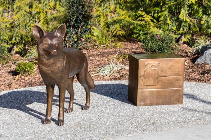 Beaverton Coyote